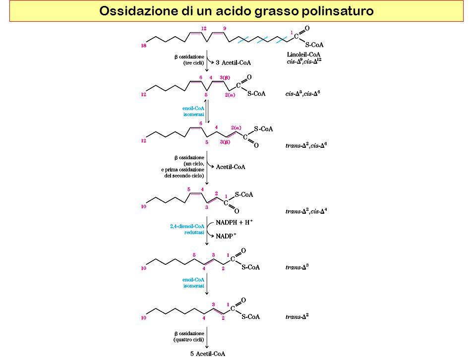 Ossidazione di un acido grasso polinsaturo
