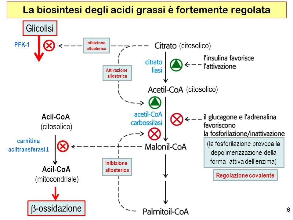 26 La biosintesi degli acidi grassi è fortemente regolata Attivazione allosterica Inibizione allosterica PFK-1 Inibizione allosterica carnitina aciltransferasi I Glicolisi Regolazione covalente (la fosforilazione provoca la depolimerizzazione della forma attiva dellenzima) (citosolico) Acil-CoA (mitocondriale) -ossidazione Acil-CoA (citosolico)