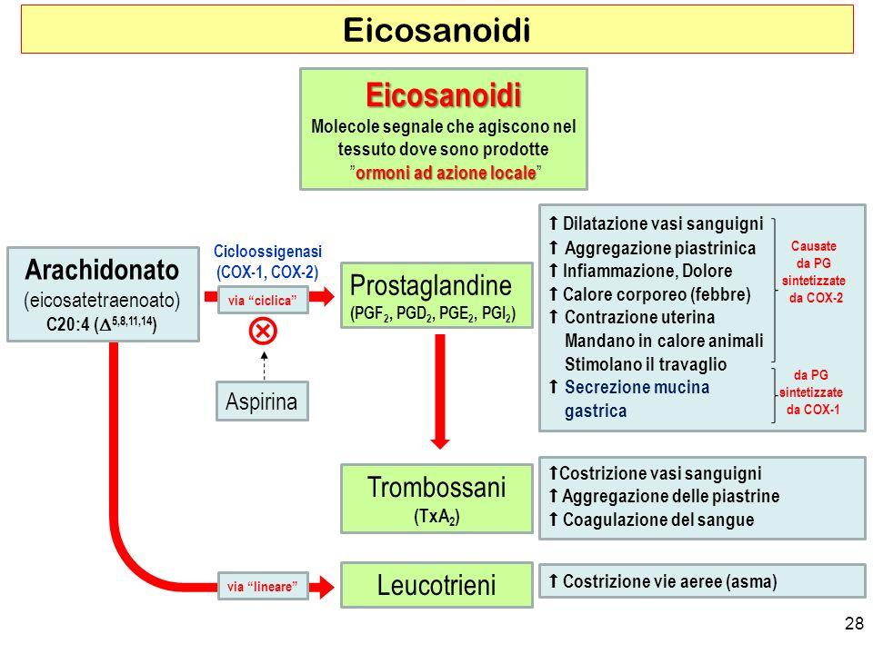 28 Eicosanoidi Dilatazione vasi sanguigni Aggregazione piastrinica Infiammazione, Dolore Calore corporeo (febbre) Contrazione uterina Mandano in calore animali Stimolano il travaglio Secrezione mucina gastrica Arachidonato (eicosatetraenoato) C20:4 ( 5,8,11,14 ) Prostaglandine (PGF 2, PGD 2, PGE 2, PGI 2 ) Trombossani (TxA 2 ) Leucotrieni Eicosanoidi Molecole segnale che agiscono nel tessuto dove sono prodotte ormoni ad azione locale ormoni ad azione locale Cicloossigenasi (COX-1, COX-2) via lineare via ciclica Costrizione vasi sanguigni Aggregazione delle piastrine Coagulazione del sangue Costrizione vie aeree (asma) Aspirina Causate da PG sintetizzate da COX-2 da PG sintetizzate da COX-1