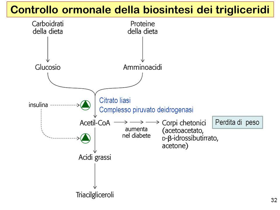 32 Controllo ormonale della biosintesi dei trigliceridi Citrato liasi Complesso piruvato deidrogenasi Perdita di peso
