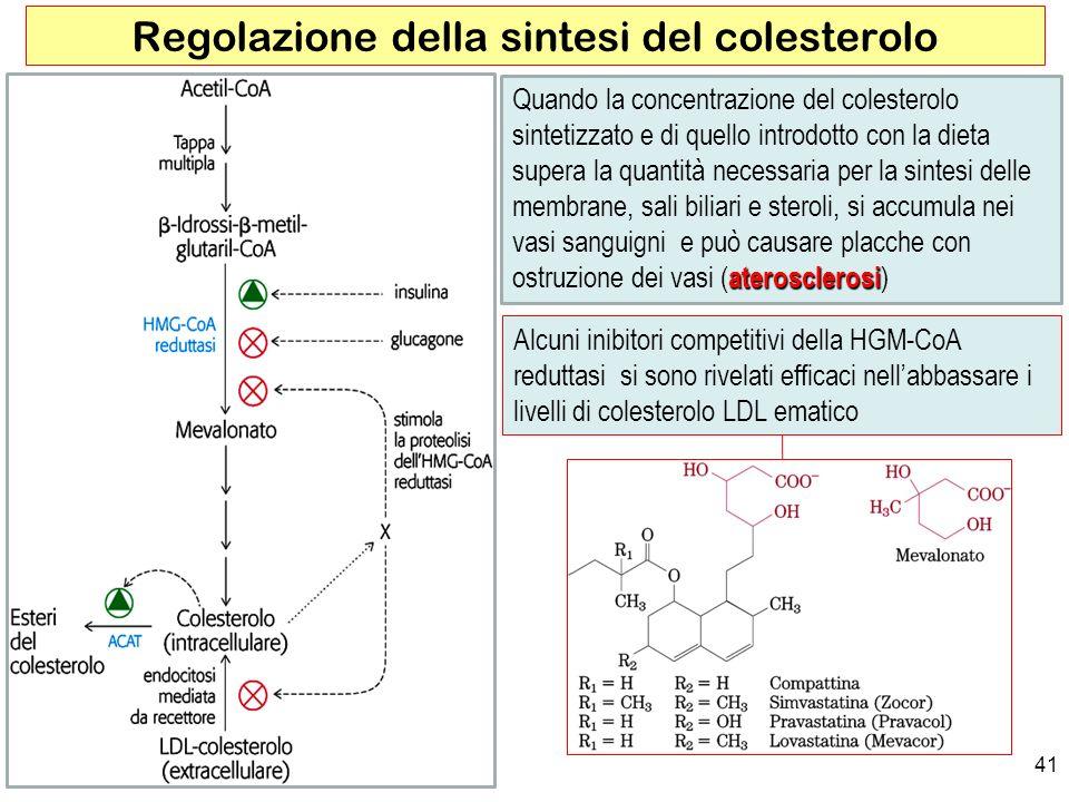 41 Regolazione della sintesi del colesterolo aterosclerosi Quando la concentrazione del colesterolo sintetizzato e di quello introdotto con la dieta supera la quantità necessaria per la sintesi delle membrane, sali biliari e steroli, si accumula nei vasi sanguigni e può causare placche con ostruzione dei vasi (aterosclerosi) Alcuni inibitori competitivi della HGM-CoA reduttasi si sono rivelati efficaci nellabbassare i livelli di colesterolo LDL ematico