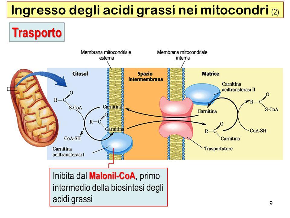 40 Assunzione di colesterolo cattivo tramite endocitosi mediata da recettore Il colesterolo che entra nella cellula tramite questa via può essere incorporato nelle membrane o esterificato dalla Acil-CoA-colesterolo aciltransferasi (ACAT) per essere conservato in gocce lipidiche