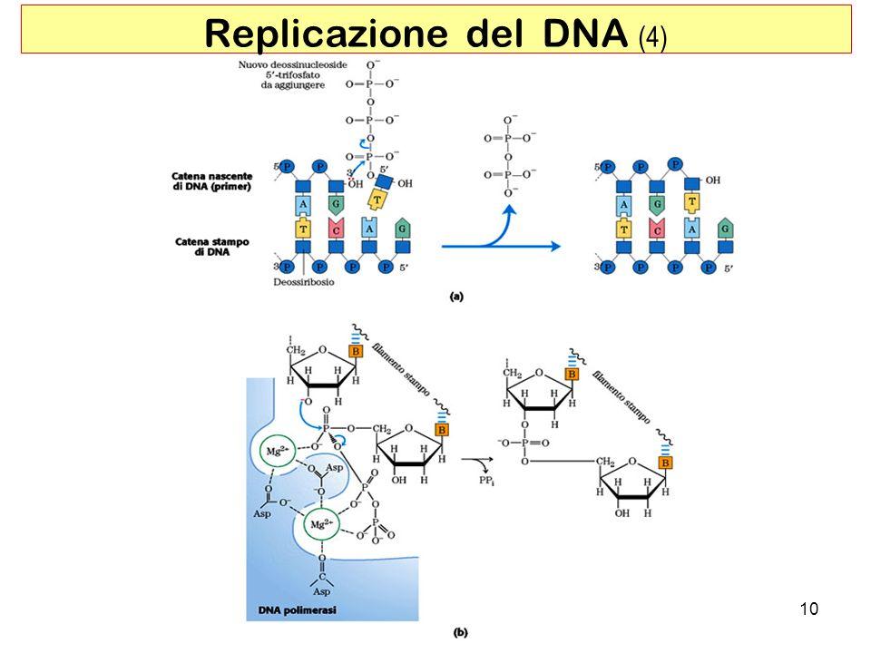 10 Replicazione del DNA (4)