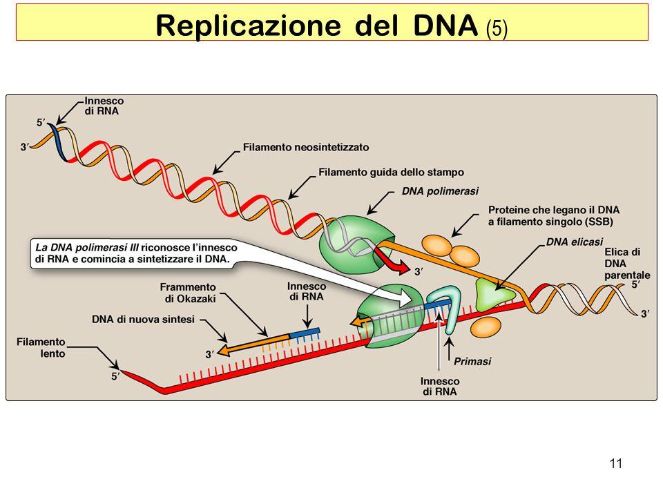 11 Replicazione del DNA (5)