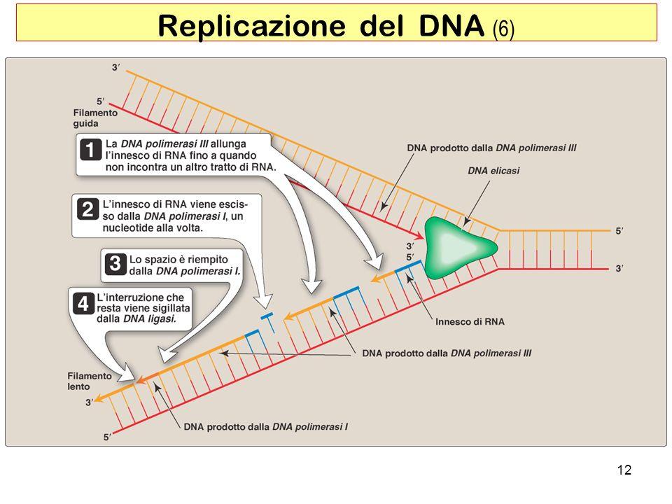 12 Replicazione del DNA (6)