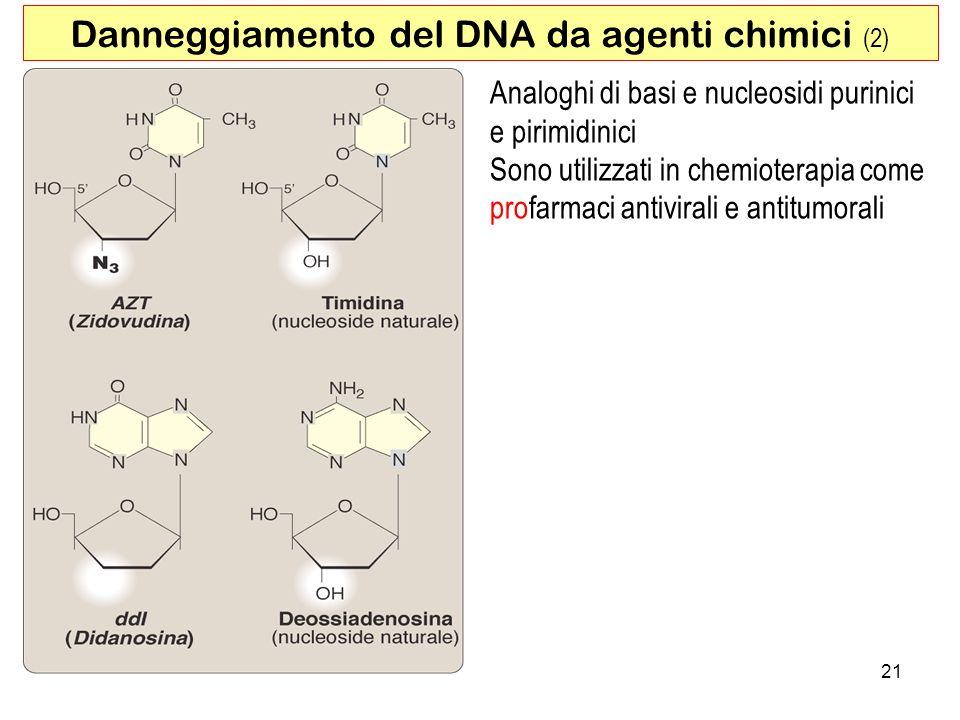 21 Danneggiamento del DNA da agenti chimici (2) Analoghi di basi e nucleosidi purinici e pirimidinici Sono utilizzati in chemioterapia come profarmaci