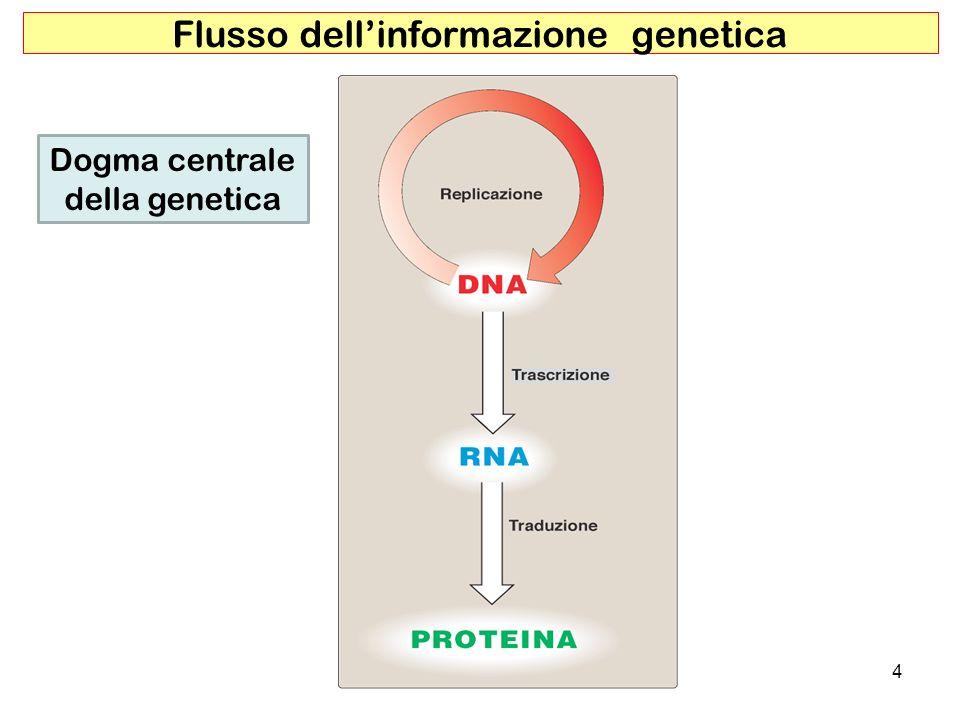 4 Flusso dellinformazione genetica Dogma centrale della genetica