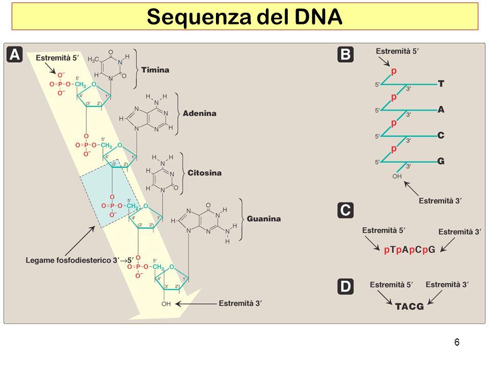6 Sequenza del DNA