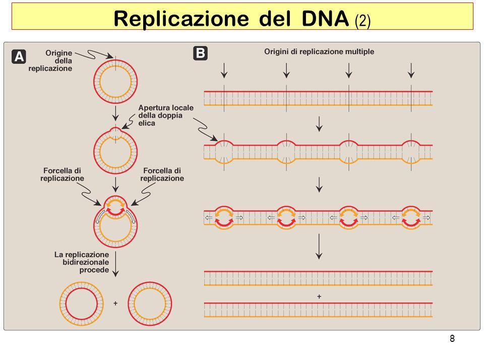 8 Replicazione del DNA (2)