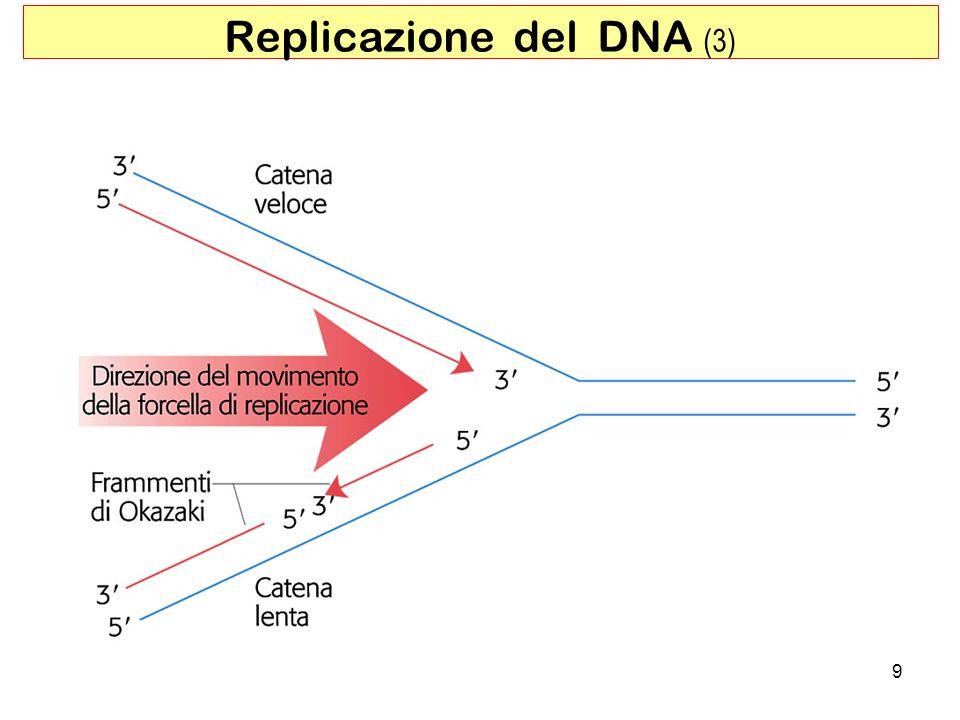9 Replicazione del DNA (3)