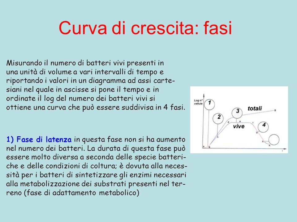 Curva di crescita: fasi Misurando il numero di batteri vivi presenti in una unità di volume a vari intervalli di tempo e riportando i valori in un diagramma ad assi carte- siani nel quale in ascisse si pone il tempo e in ordinate il log del numero dei batteri vivi si ottiene una curva che può essere suddivisa in 4 fasi.