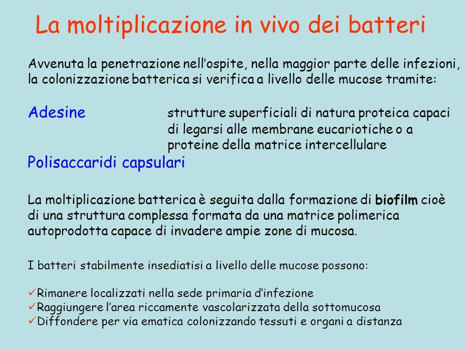 La moltiplicazione in vivo dei batteri I batteri stabilmente insediatisi a livello delle mucose possono: Rimanere localizzati nella sede primaria dinf