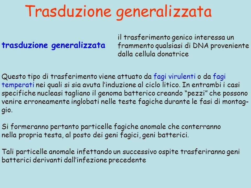 Trasduzione generalizzata trasduzione generalizzata il trasferimento genico interessa un frammento qualsiasi di DNA proveniente dalla cellula donatrice Questo tipo di trasferimento viene attuato da fagi virulenti o da fagi temperati nei quali si sia avuta linduzione al ciclo litico.