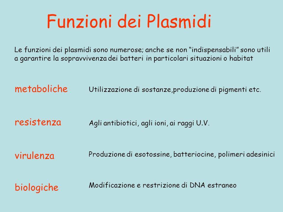 Funzioni dei Plasmidi Le funzioni dei plasmidi sono numerose; anche se non indispensabili sono utili a garantire la sopravvivenza dei batteri in particolari situazioni o habitat metaboliche Utilizzazione di sostanze,produzione di pigmenti etc.