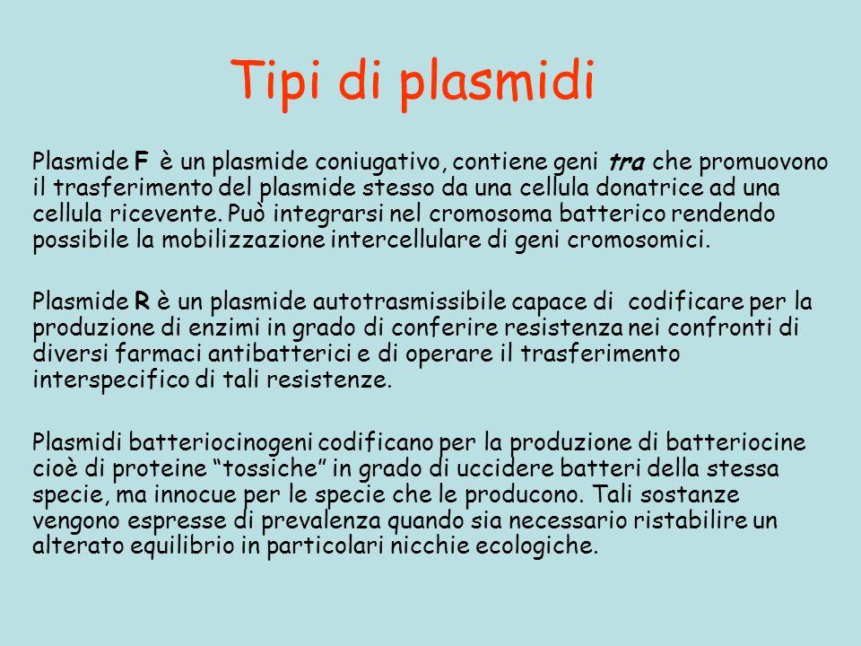 Tipi di plasmidi Plasmide F è un plasmide coniugativo, contiene geni tra che promuovono il trasferimento del plasmide stesso da una cellula donatrice ad una cellula ricevente.