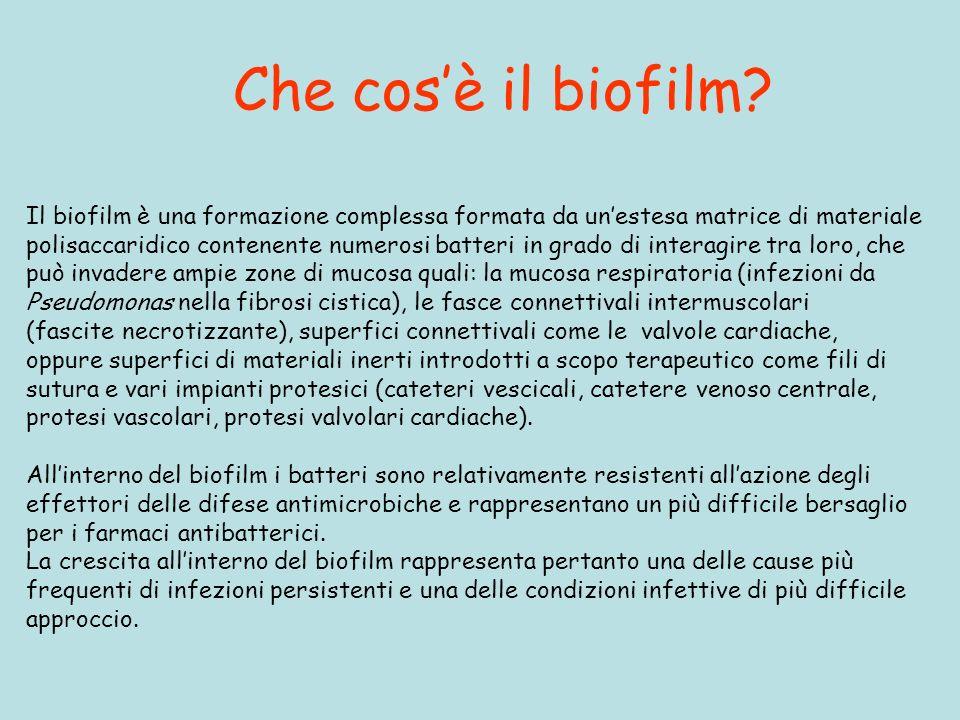 Che cosè il biofilm? Il biofilm è una formazione complessa formata da unestesa matrice di materiale polisaccaridico contenente numerosi batteri in gra