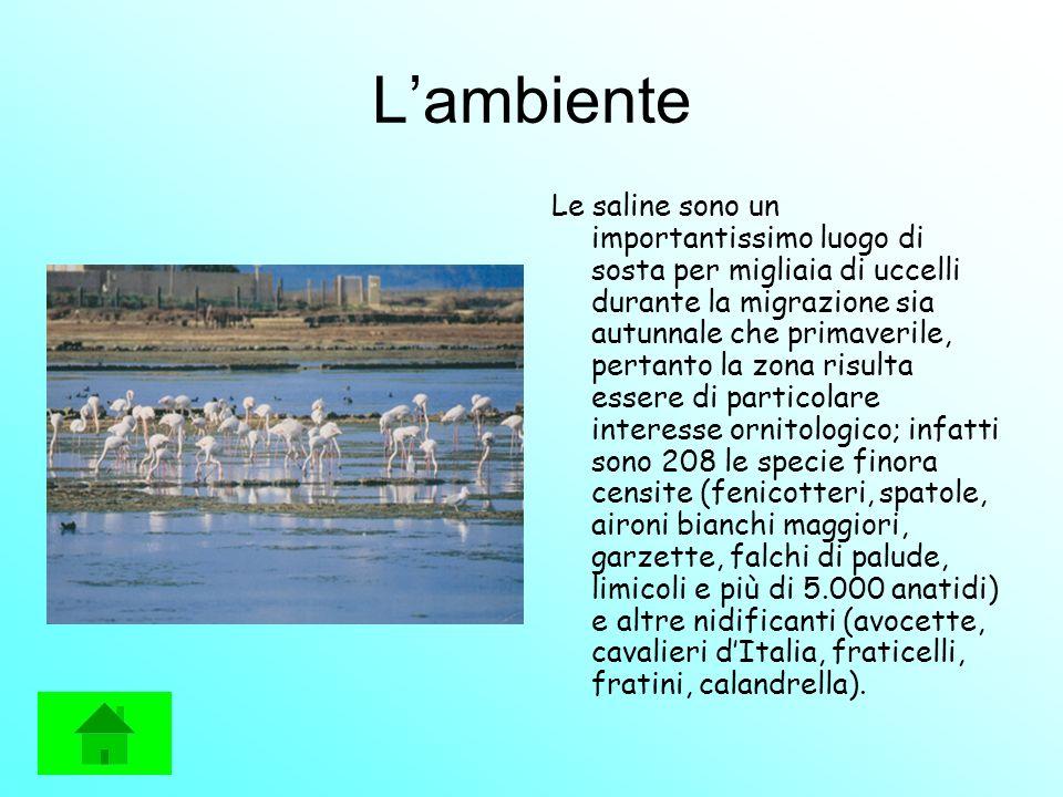 Lambiente Le saline sono un importantissimo luogo di sosta per migliaia di uccelli durante la migrazione sia autunnale che primaverile, pertanto la zo