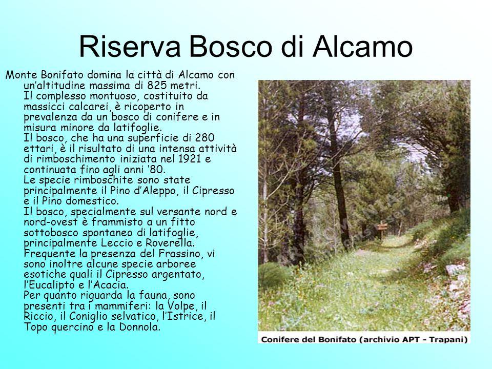 Riserva Bosco di Alcamo Monte Bonifato domina la città di Alcamo con unaltitudine massima di 825 metri. Il complesso montuoso, costituito da massicci