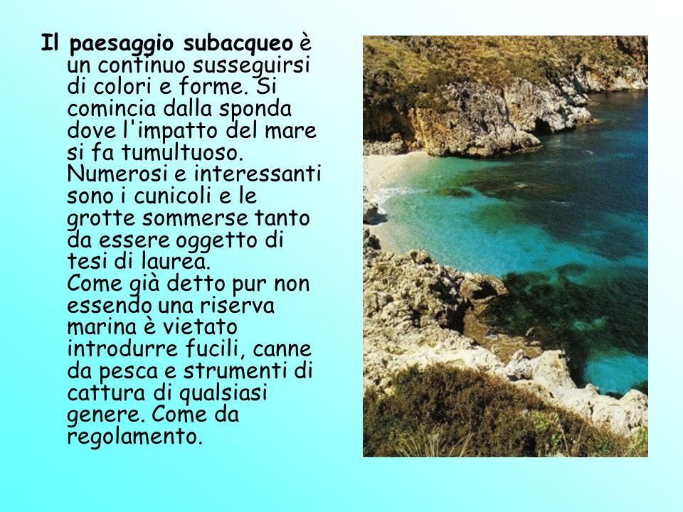 Il paesaggio subacqueo è un continuo susseguirsi di colori e forme. Si comincia dalla sponda dove l'impatto del mare si fa tumultuoso. Numerosi e inte
