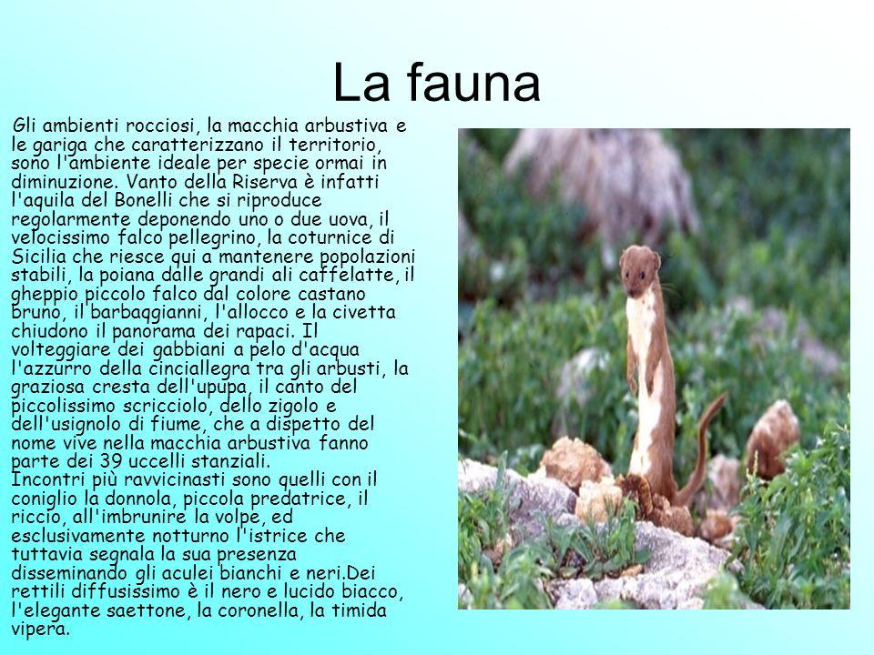 In ogni stagione si potrà incontrare la lucertola siciliana una specie esclusiva dell isola.La fauna minore è più facile da osservare: Cavallette, mantidi, coleotteri, farfalle e multicolori bombi popolano ogni ambiente della Riserva tra i quali il panfago una cavalletta verde lunga 7 - 8 cm.