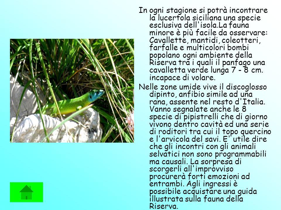 In ogni stagione si potrà incontrare la lucertola siciliana una specie esclusiva dell'isola.La fauna minore è più facile da osservare: Cavallette, man