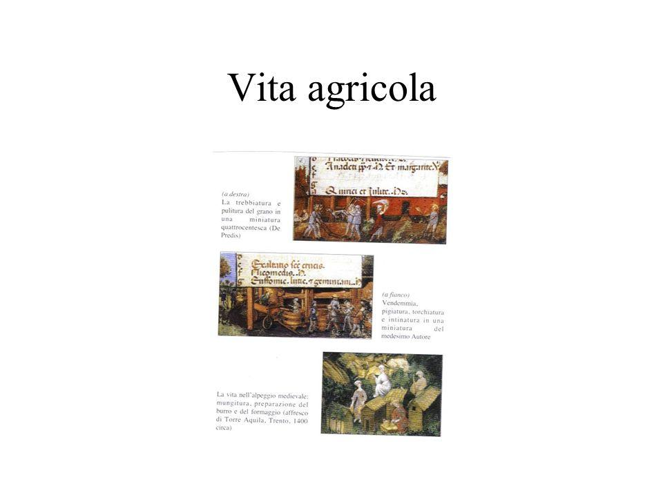 Vita agricola