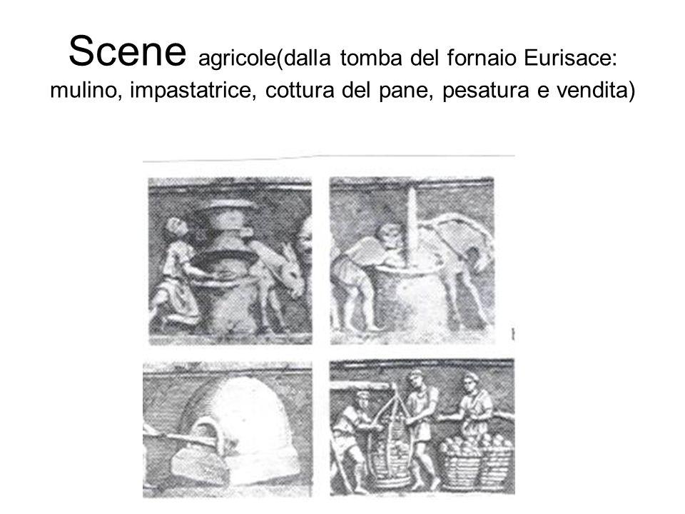 Scene agricole(dalla tomba del fornaio Eurisace: mulino, impastatrice, cottura del pane, pesatura e vendita)