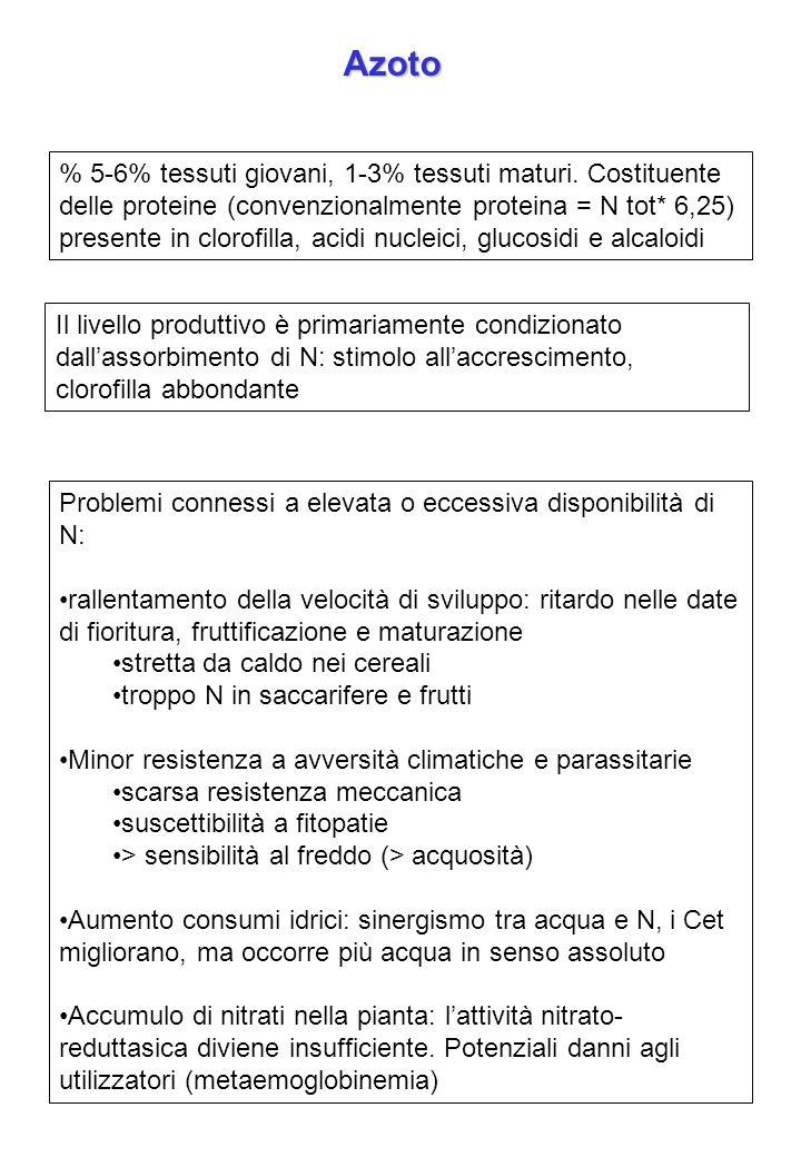Azoto % 5-6% tessuti giovani, 1-3% tessuti maturi. Costituente delle proteine (convenzionalmente proteina = N tot* 6,25) presente in clorofilla, acidi