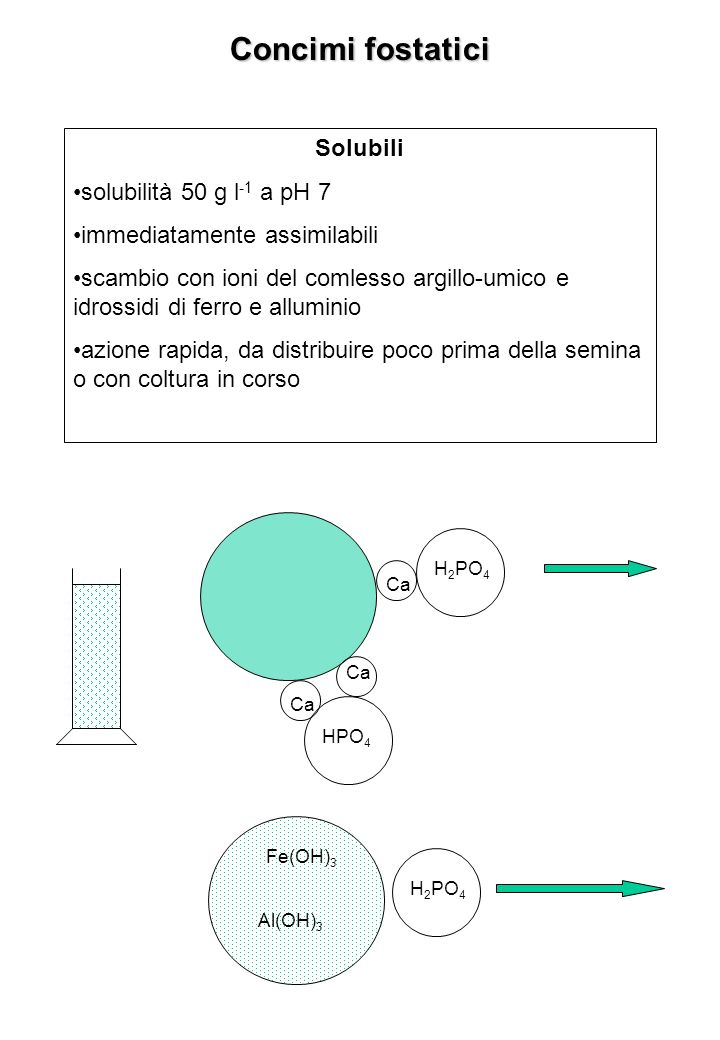 Concimi fostatici Solubili solubilità 50 g l -1 a pH 7 immediatamente assimilabili scambio con ioni del comlesso argillo-umico e idrossidi di ferro e alluminio azione rapida, da distribuire poco prima della semina o con coltura in corso Ca H 2 PO 4 Ca HPO 4 H 2 PO 4 Al(OH) 3 Fe(OH) 3