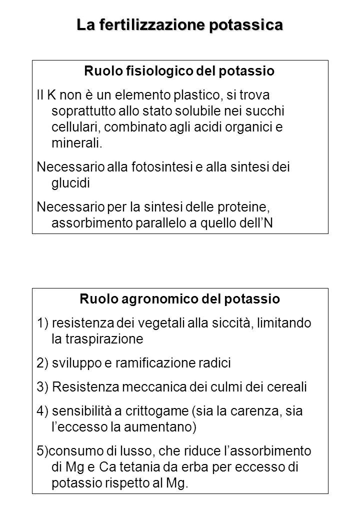 Concimi potassici I concimi potassici hanno in comune, poiché derivano tutti dalla silvinite (sale grezzo di K) solubilità in acqua elevata liberano ioni K + del complesso argillo-umico il K + è assorbito immediatamente miniere Silvinite (KCl + NaCl Kieserite (MgSO 4, H 2 O Solfato di potassio Cloruro di potassio Complessi binari e ternari Concimi P semplici H 2 SO 4 Eliminazione NaCl, raffinazione KCl Patentkali (K 2 SO 4, MgSO 4 NH 3, HNO 3,H 3 PO 4 Eliminazione MgCl 2