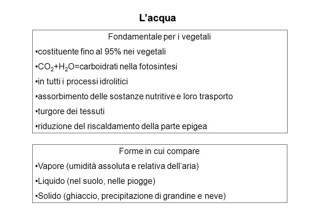 Lacqua Fondamentale per i vegetali costituente fino al 95% nei vegetali CO 2 +H 2 O=carboidrati nella fotosintesi in tutti i processi idrolitici assor