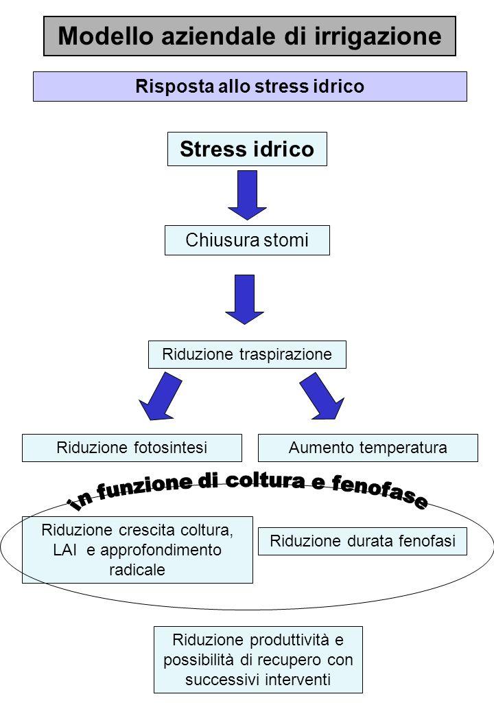 Modello aziendale di irrigazione Risposta allo stress idrico Stress idrico Riduzione traspirazione Chiusura stomi Riduzione crescita coltura, LAI e ap
