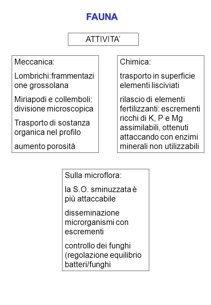 Macrofauna (> 2mm) Composta da topi, talpe, lombrichi Lombrichi: terreni poveri di S.O.: 100 m 2 500 kg ha -1 terreni ricchi di S.O.: 1000 m 2 5000 kg ha -1 biologia: cercano umidità e temperature medie: in profondità in estate, in superficie primavera e autunno nutrimento: quasi esclusivamente residui vegetali, prelevati in superficie e portati in profondità mescolati a terreno escrementi: da alcune specie in superficie, altre in profondità occorrono circa 10 anni per il passaggio di tutta la S.O.