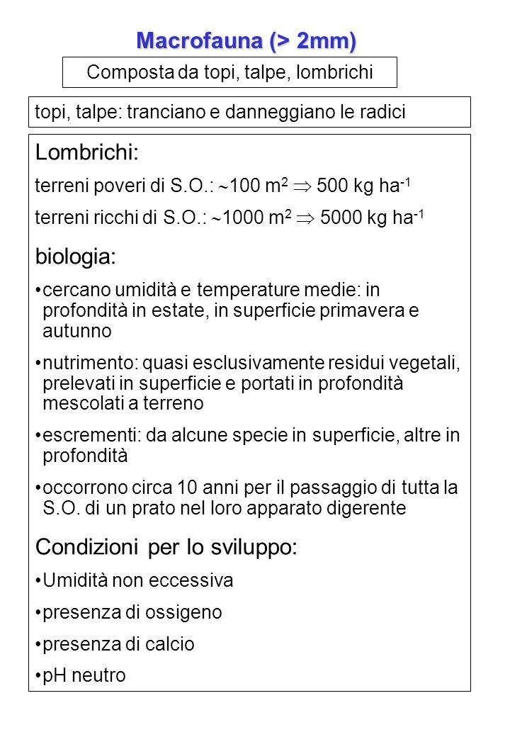 Composta da insetti, aracnidi, miriapodi mesofauna (2 - 0,2 mm) Collemboli e acari: fino a 200.000 m 2 Biologia: nutrizione: sostanze organiche in decomposizione, funghi, batteri, deiezioni, altri animali non mescolano al terreno lingerito relativamente poco importanti Importanti per danni alle piante: elateridi, grillotalpa, larve di coleotteri (maggiolini) geodisinfestazione microfauna (> 0,2 mm) Protozoi: abbondanti nei primi cm di suolo, se umidi e ricchi di S.O.; da 1 a 1.5 milioni per grammo di terreno 100 kg ha -1 ; nutrizione: predatori di batteri