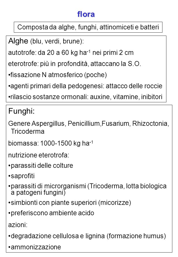 Composta da alghe, funghi, attinomiceti e batteri flora Alghe (blu, verdi, brune): autotrofe: da 20 a 60 kg ha -1 nei primi 2 cm eterotrofe: più in pr