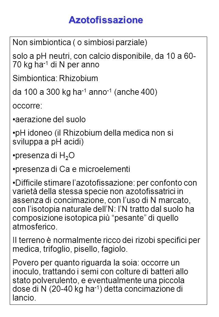 Azotofissazione Non simbiontica ( o simbiosi parziale) solo a pH neutri, con calcio disponibile, da 10 a 60- 70 kg ha -1 di N per anno Simbiontica: Rh