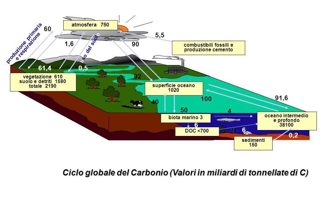 atmosfera 750 superficie oceano 1020 sedimenti 150 DOC <700 5,5 60 1,6 90 92 91,6 100 61,4 0,5 50 40 6 4 6 0,2 produzione primaria e respirazione uso del suolo Ciclo globale del Carbonio (Valori in miliardi di tonnellate di C) combustibili fossili e produzione cemento vegetazione 610 suolo e detriti 1580 totale 2190 biota marino 3 oceano intermedio e profondo 38100