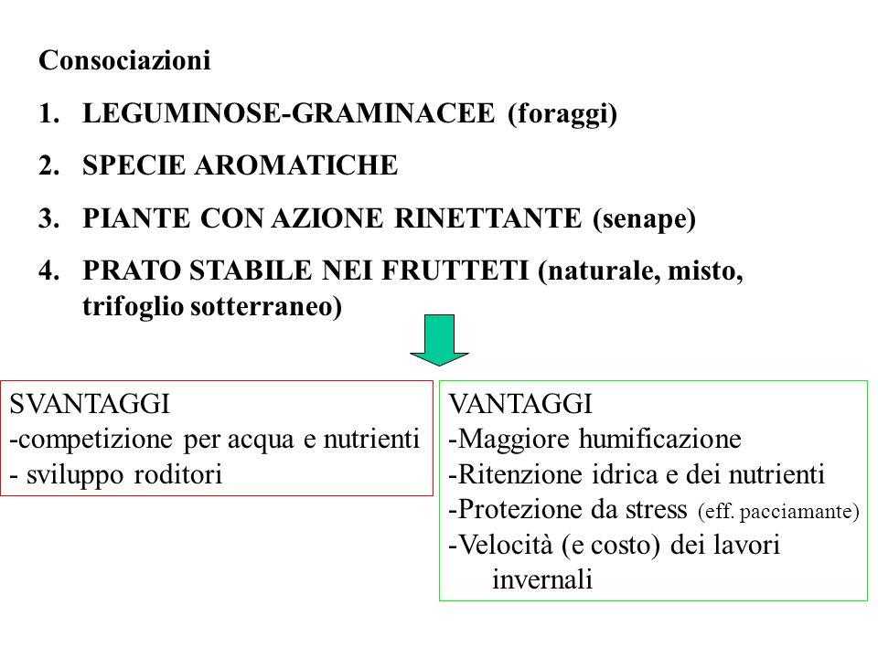 Consociazioni 1.LEGUMINOSE-GRAMINACEE (foraggi) 2.SPECIE AROMATICHE 3.PIANTE CON AZIONE RINETTANTE (senape) 4.PRATO STABILE NEI FRUTTETI (naturale, mi