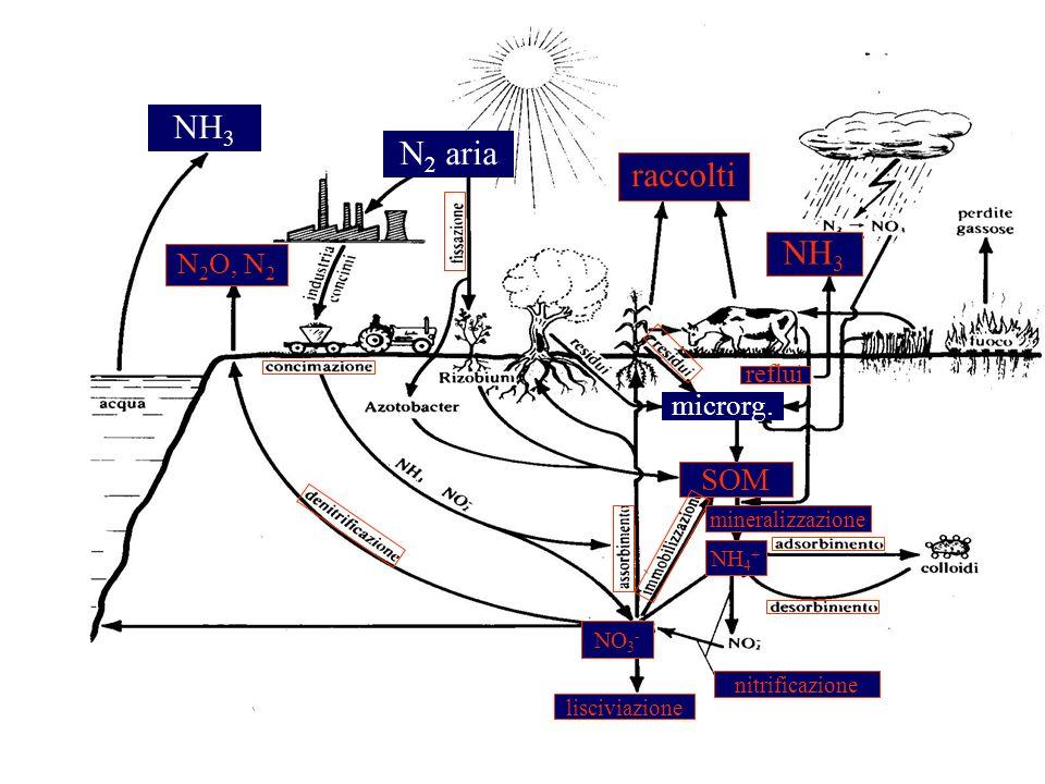 NH 3 N 2 aria raccolti N 2 O, N 2 NH 3 SOM microrg. mineralizzazione NH 4 + nitrificazione lisciviazione NO 3 - reflui