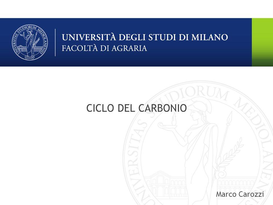 CICLO DEL CARBONIO Marco Carozzi