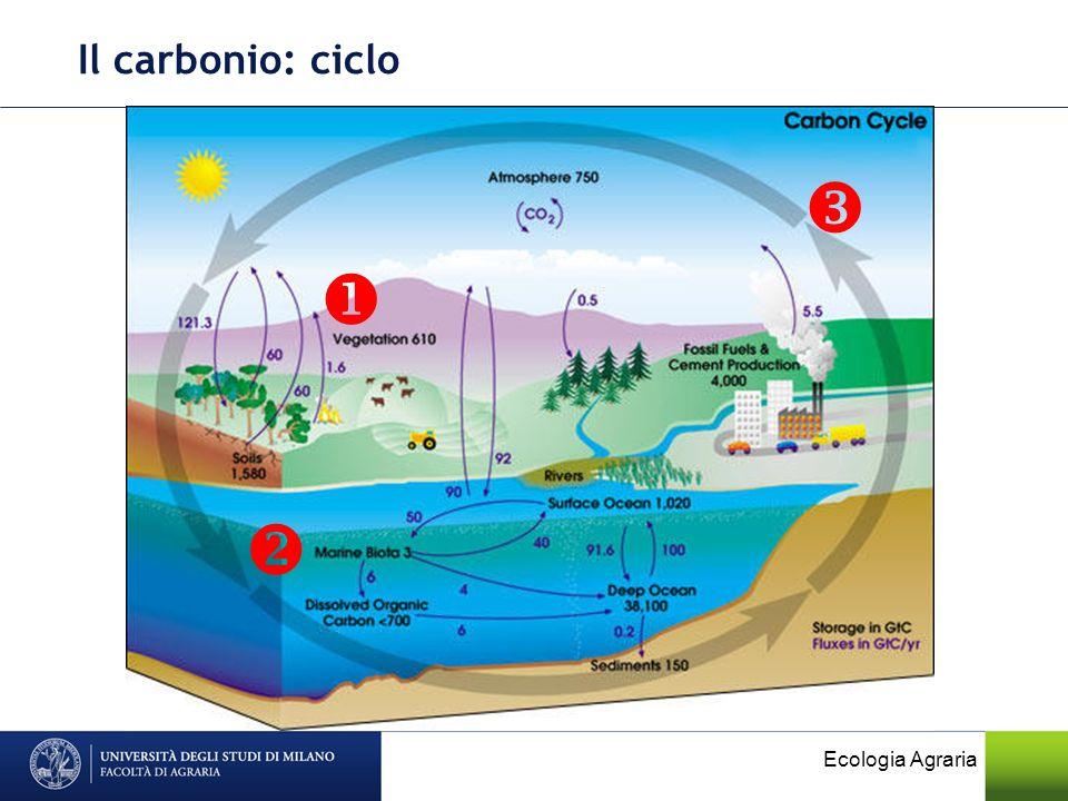 Nel ciclo del carbonio, il C passa dallatmosfera alle piante, agli animali e poi ai decompositori, quindi ritorna nellatmosfera.