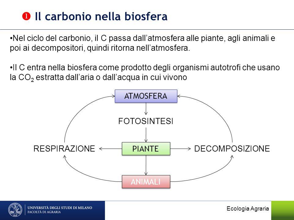 Ecologia Agraria FOTOSINTESI: da C inorganico a C organico 6CO 2 + 6H 2 O + Energia C 6 H 12 O 6 + 6O 2 RESPIRAZIONE: da C organico a C inorganico C 6 H 12 O 6 + 6O 2 6CO 2 + 6H 2 O + Energia se non cè ossigeno cè FERMENTAZIONE C 6 H 12 O 6 2 C 2 H 5 OH + 2 CO 2 (alcolica) DECOMPOSIZIONE: da Corganico a C inorganico Il carbonio nella biosfera