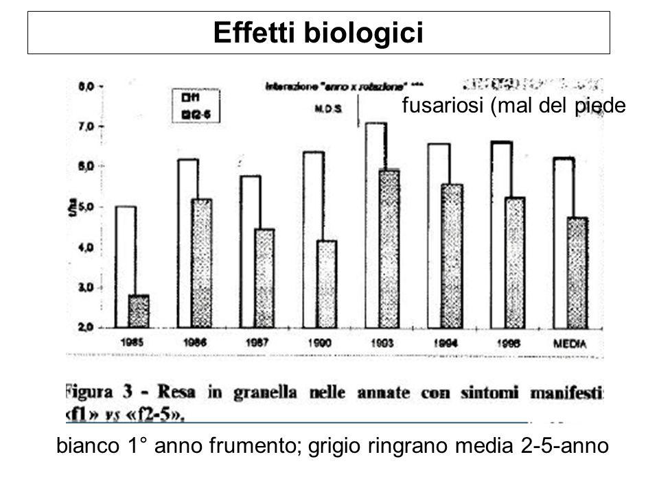 Effetti biologici bianco 1° anno frumento; grigio ringrano media 2-5-anno fusariosi (mal del piede