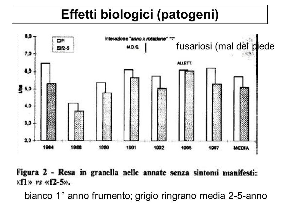 Effetti biologici (patogeni) bianco 1° anno frumento; grigio ringrano media 2-5-anno fusariosi (mal del piede
