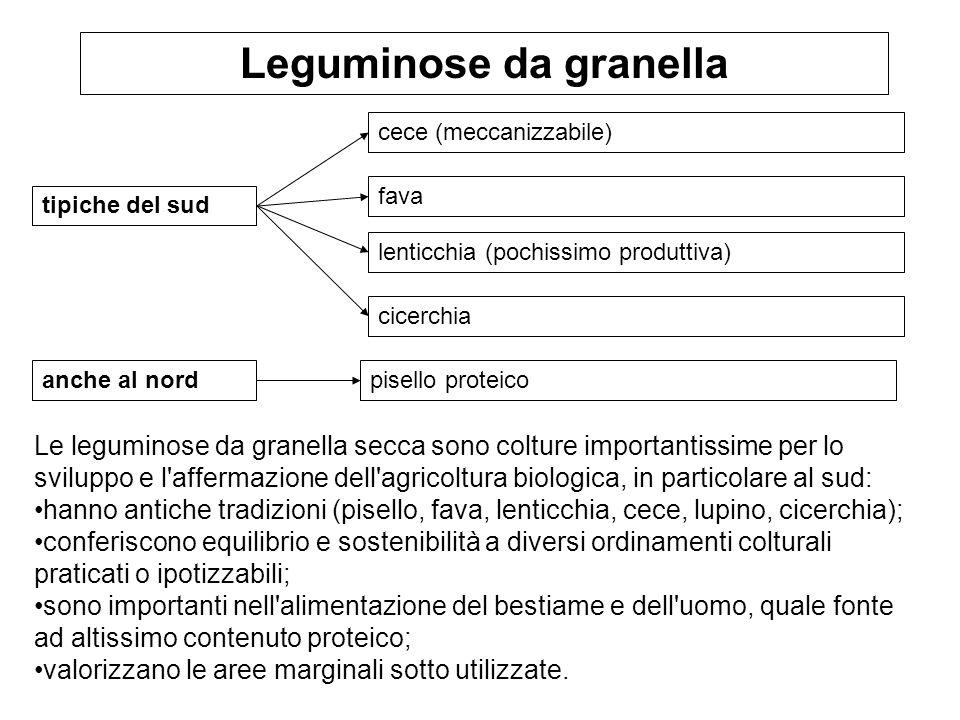 tipiche del sud Leguminose da granella cece (meccanizzabile) fava lenticchia (pochissimo produttiva) cicerchia Le leguminose da granella secca sono co
