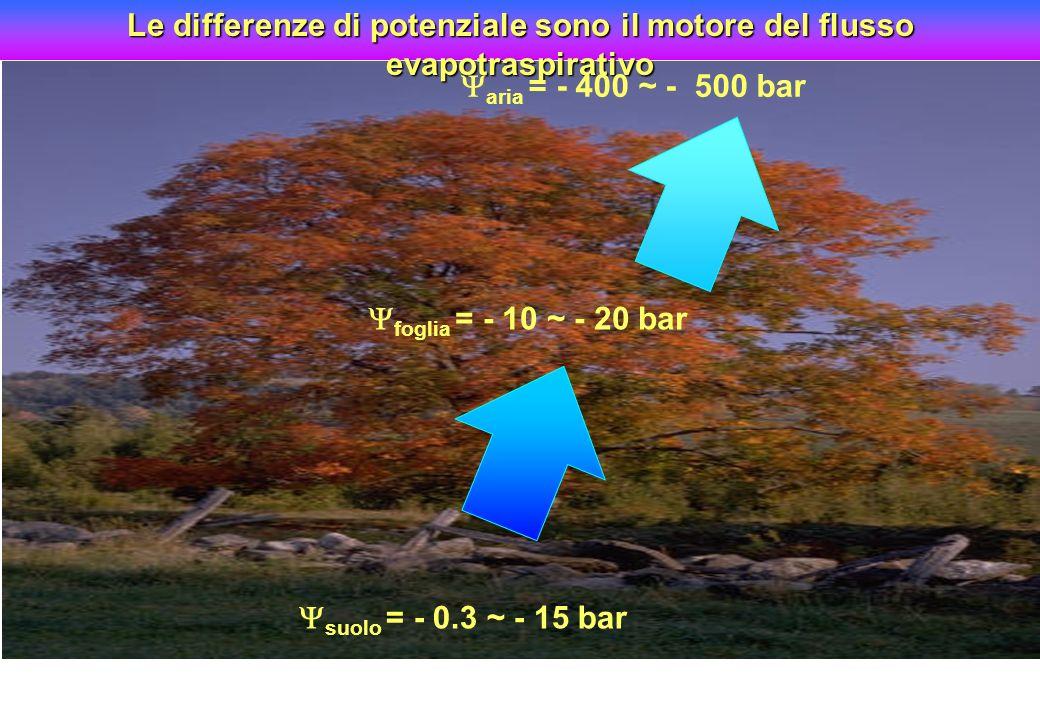 aria = - 400 ~ - 500 bar suolo = - 0.3 ~ - 15 bar foglia = - 10 ~ - 20 bar Le differenze di potenziale sono il motore del flusso evapotraspirativo ari