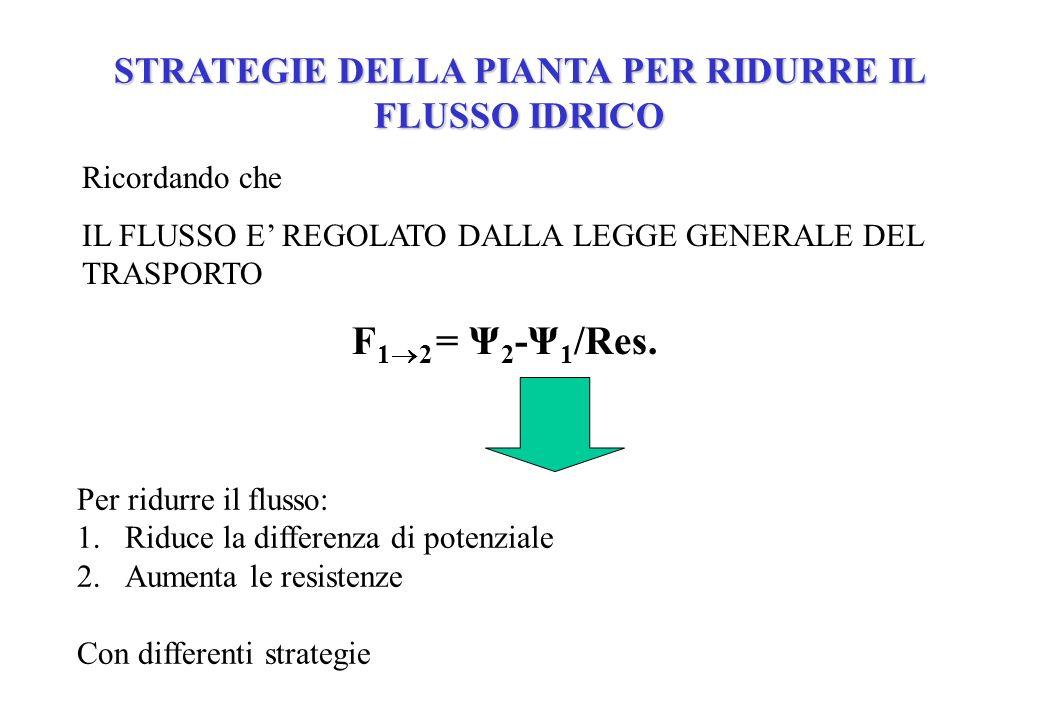 Ricordando che IL FLUSSO E REGOLATO DALLA LEGGE GENERALE DEL TRASPORTO F 1 2 = Ψ 2 -Ψ 1 /Res. STRATEGIE DELLA PIANTA PER RIDURRE IL FLUSSO IDRICO Per