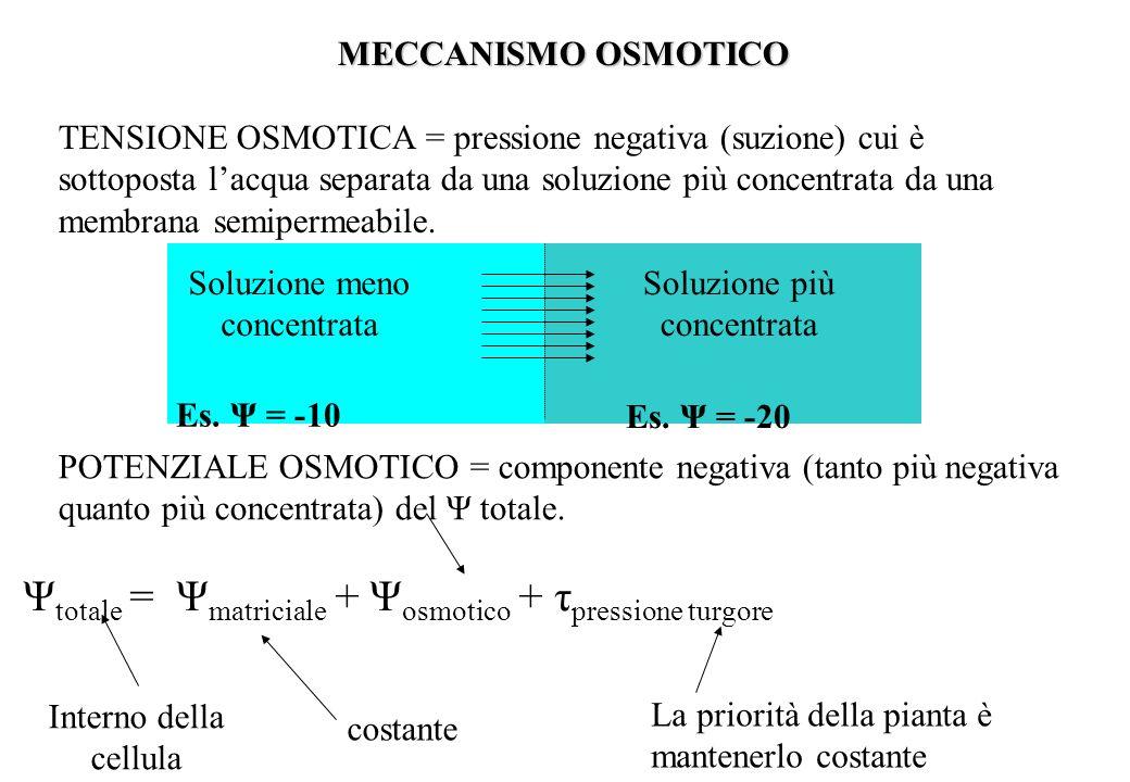 MECCANISMO OSMOTICO TENSIONE OSMOTICA = pressione negativa (suzione) cui è sottoposta lacqua separata da una soluzione più concentrata da una membrana