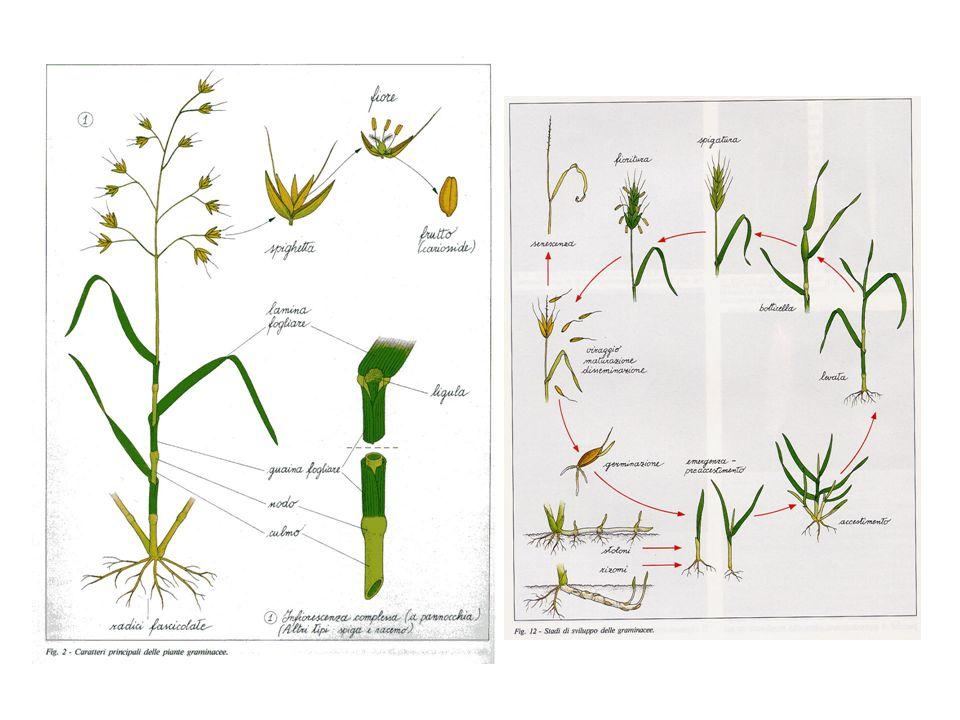 Modalità dei trattamenti diserbanti Trattamenti in pre semina Distruzione vegetazione preesistente Trattamenti in pre emergenza (nel periodo tra la semina e lemergenza della coltura).