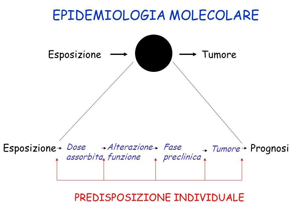 EsposizioneTumore EPIDEMIOLOGIA MOLECOLARE Esposizione Prognosi Dose assorbita Alterazione funzione Fase preclinica Tumore PREDISPOSIZIONE INDIVIDUALE